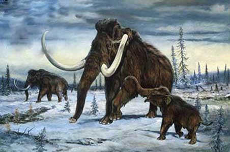 Mamut descubierto en Siberia data de 37 mil años