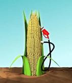 Obtención de biocombustibles amenaza a campesinos pobres
