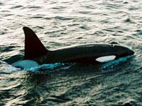 Una ballena en puerto cubano