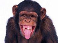 La risa pudo aparecer antes entre los simios