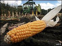 Biocombustibles pueden ser dañinos para el medio ambiente