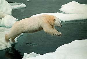 Deshielo del Ártico se acelera, indican expertos