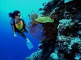 Cuba, un atractivo escenario para el buceo